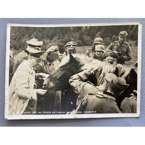 In den Vogesen trifft der Führer ein krankes umherirrendes Armeepferd Postcard